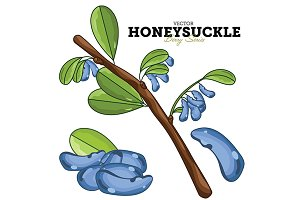 Honeysuckle Set, Vector.