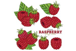 Raspberry Set, Vector.