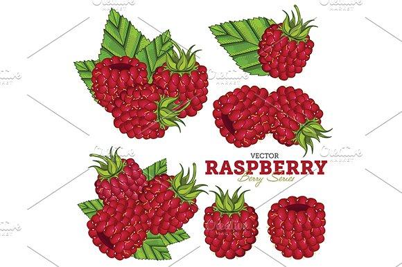 Raspberry Set, Vector.