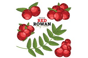 Rowan Set, Vector.
