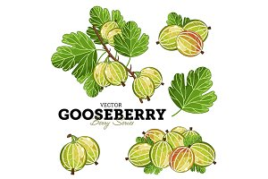 Gooseberry Set, Vector.