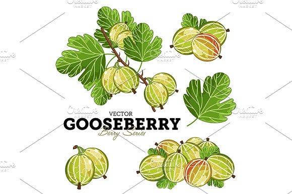 Gooseberry Set, Vector.