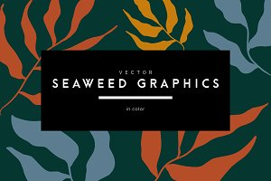 Vector Seaweed Graphics