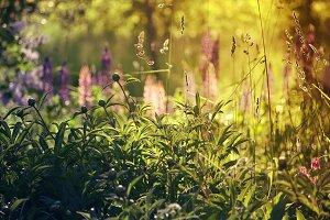 Summer grass in sunlight.