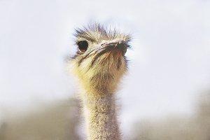 Ostrich-eyezed