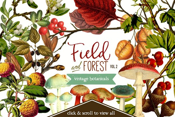 Field & Forest Vintage Botanicals #…