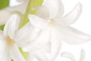 Macro shot of hyiacinth flower