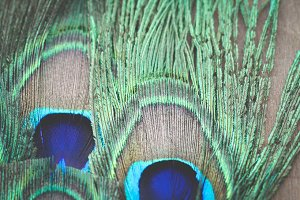 Peacock Feather II