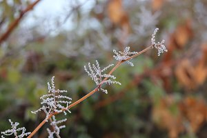 Frozen Branch