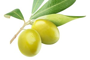 Two green olives on a branch