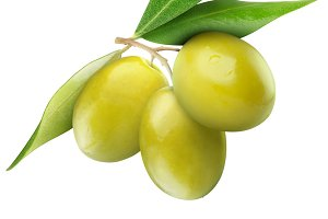 Green olives on a branch isolated