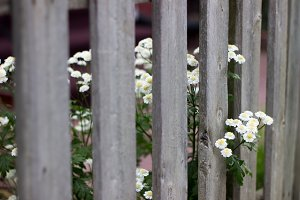 Wildflowers peaking out of a fence
