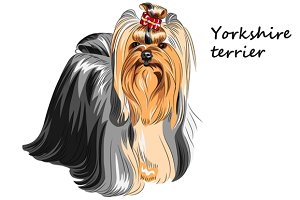 Dog Yorkshire Terrier breed