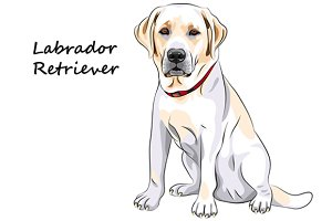 Dog Labrador Retriever breed