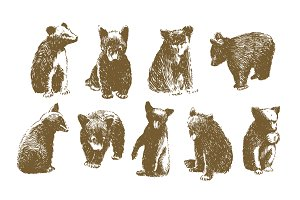 9 Vector Bear Illustrations