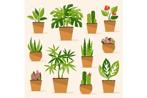 Houseplants. Vector Illustration