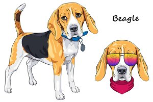 Dog Beagle breed