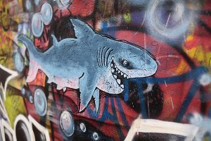 Graffiti shark on the wall