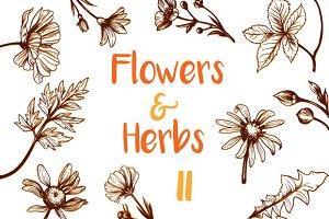 Vintage Flowers & Herbs II