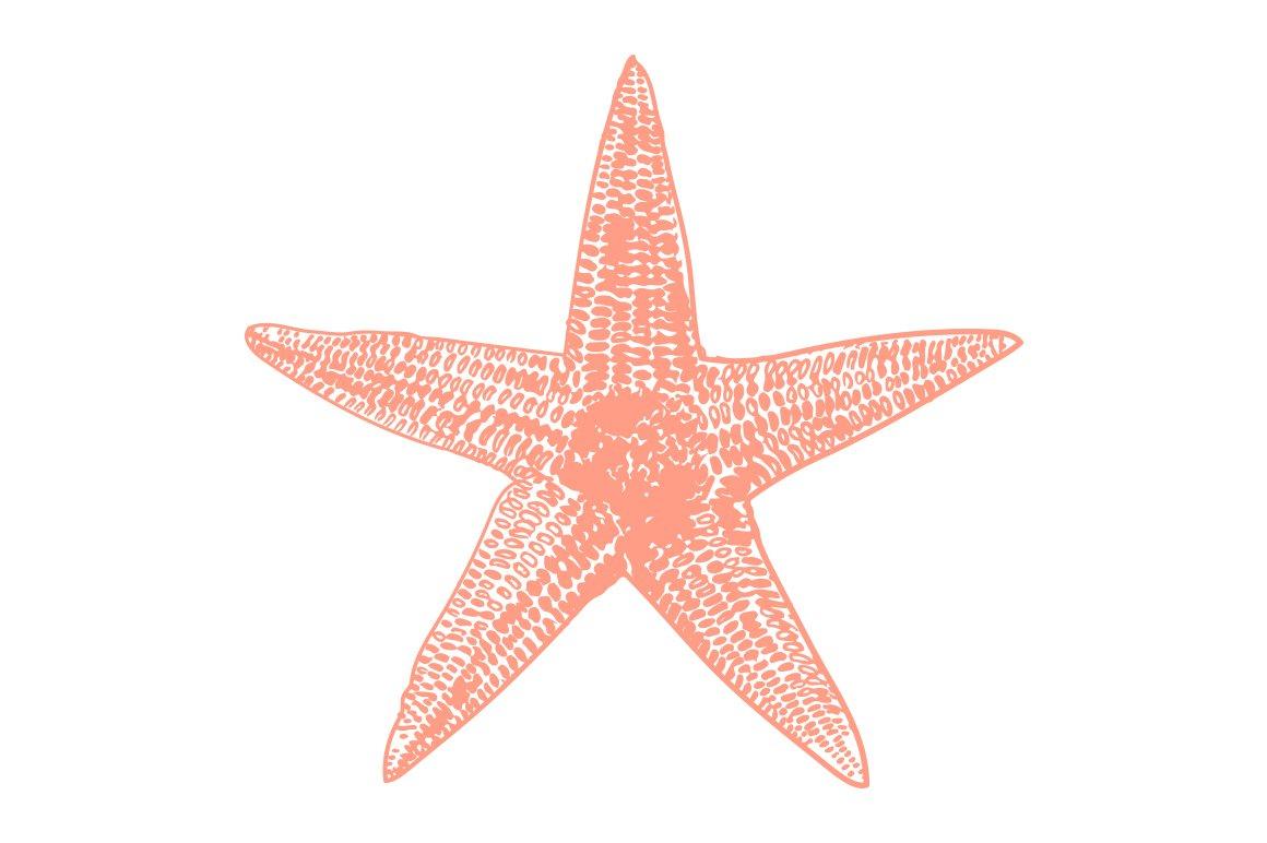 Vector Starfish Illustration ~ Illustrations ~ Creative Market
