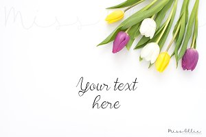 Styled stock photography tulips