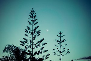 Fern & Moon, New Zealand