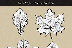 Set of 4 sketch leaf in retro style