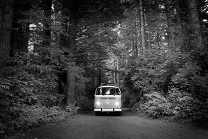 VW Bus in the Redwoods - B/W