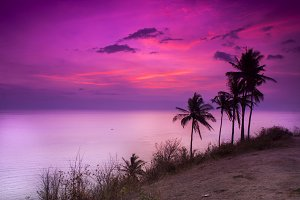 Coconut Tree And Sunset Beach