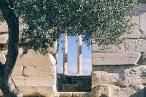 Olive tree and ruins of Athens
