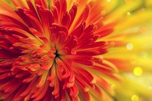 Orange-red flower