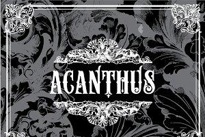 17 Vintage Acanthus Flourishes