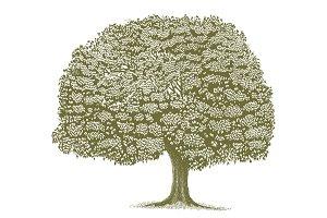 Woodcut Tree