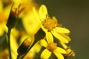 Macro of flowers yellow