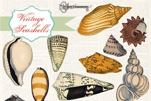 Vintage Sea Shell Illustrations