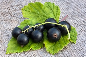 berries of black currant