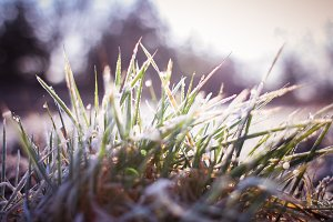 Frozen Land: Grass