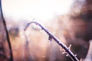 Frozen Land: Spines