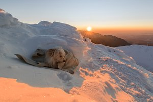 Dog resting at the top of mountain