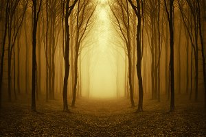 Path trough surreal forest with fog