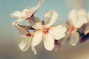 detail of tree flowers