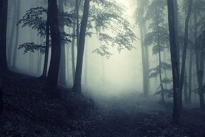 Mysterious dark fantasy foggy forest