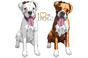 Two dogs Boxer breed
