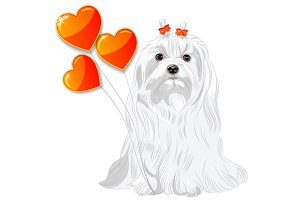 Dog breed Maltese