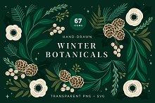 Christmas Botanical Illustrations