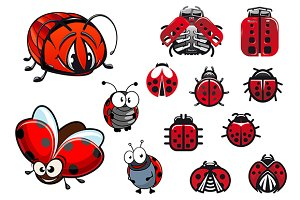Ladybugs, ladybirds and beetles