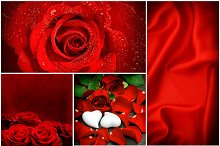 Red Roses. Valentines Day