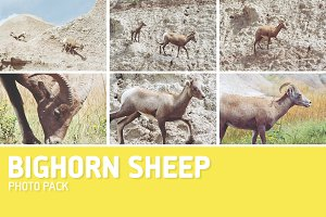 Bighorn Sheep Photo Pack