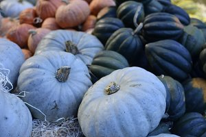 Pumpkins on the market