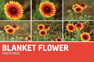 Blanket Flower Photo Pack